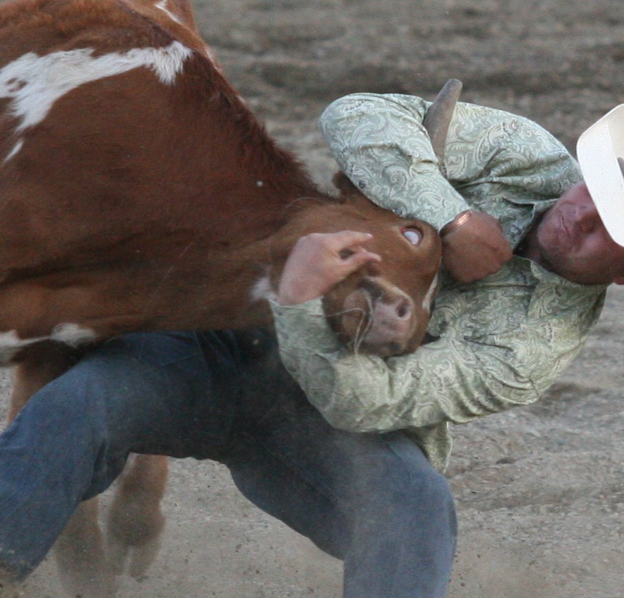 Steer death at Calgary Stampede
