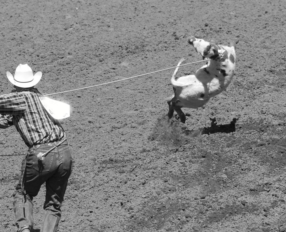 B&W Stampede calf roping