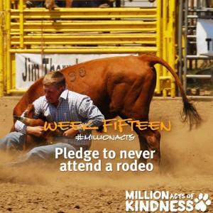 BC SPCA pledge on rodeos