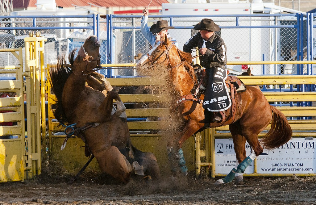 073115 - Abbotsford, BC Chung Chow photo 2015 Agrifair Rodeo in Abbotsford. Bronco riding Bronco refused to get up until motivated by the cowboy behind the fence.