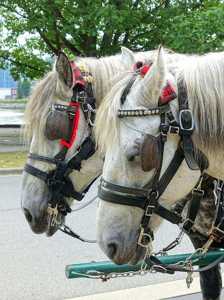 horses_-_stanley_park_vancouver_canada_-_dsc09752