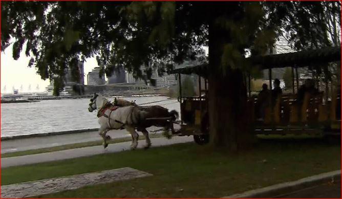 photo-horses-bolt