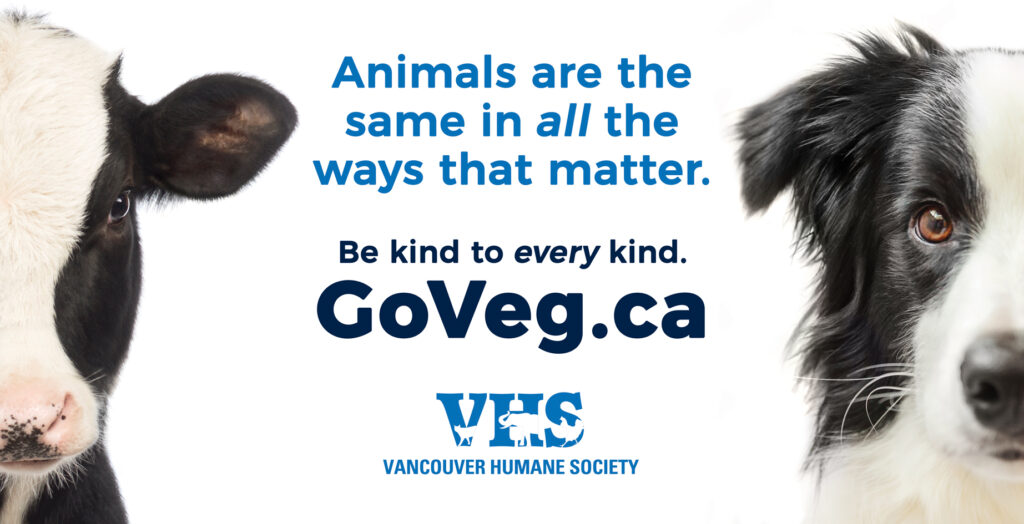 "Thought-provoking billboard urges Vancouverites to ""Go Veg"""