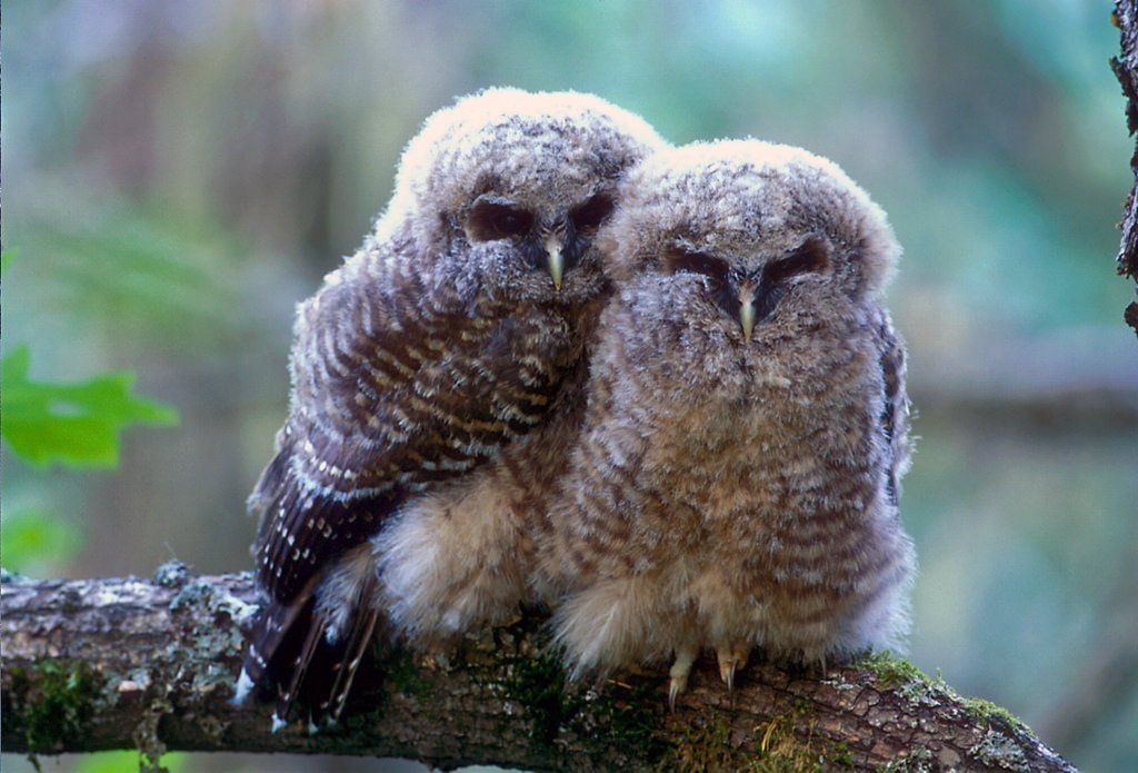 Save owls and bears