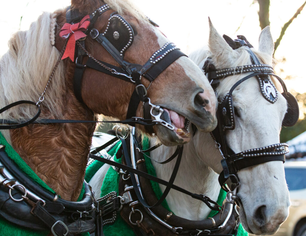 Vancouver Humane Society says horse carriage rides in Stanley Park are unsafe