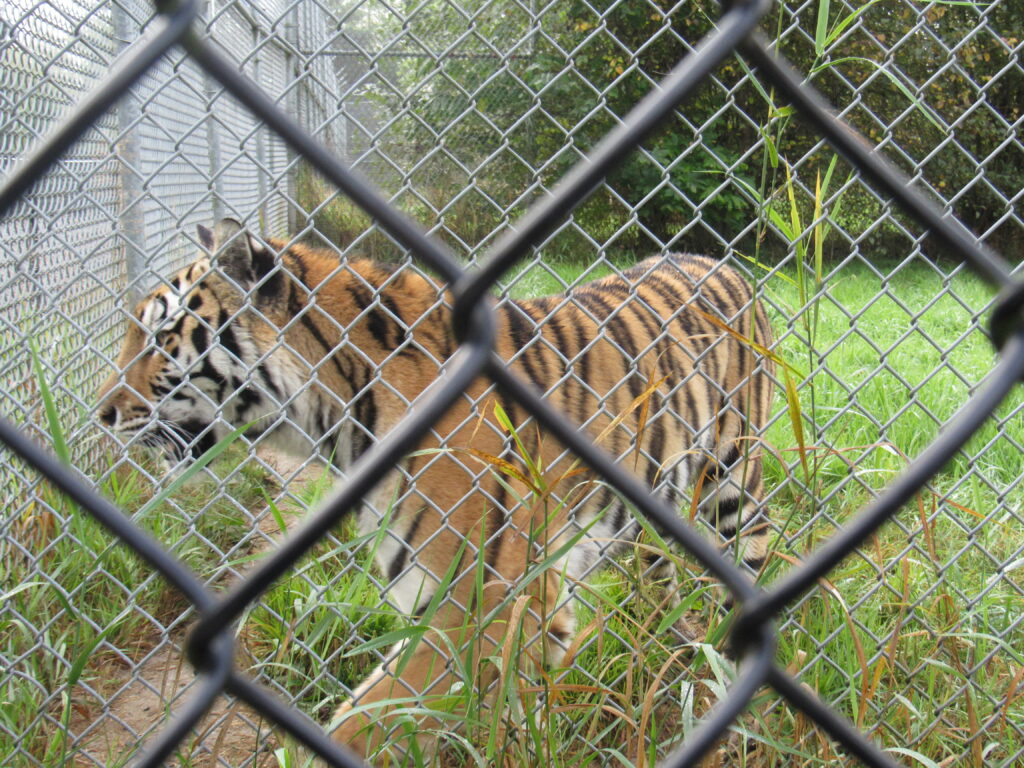 Vancouver Humane Society calls for investigation into animal care at Greater Vancouver Zoo