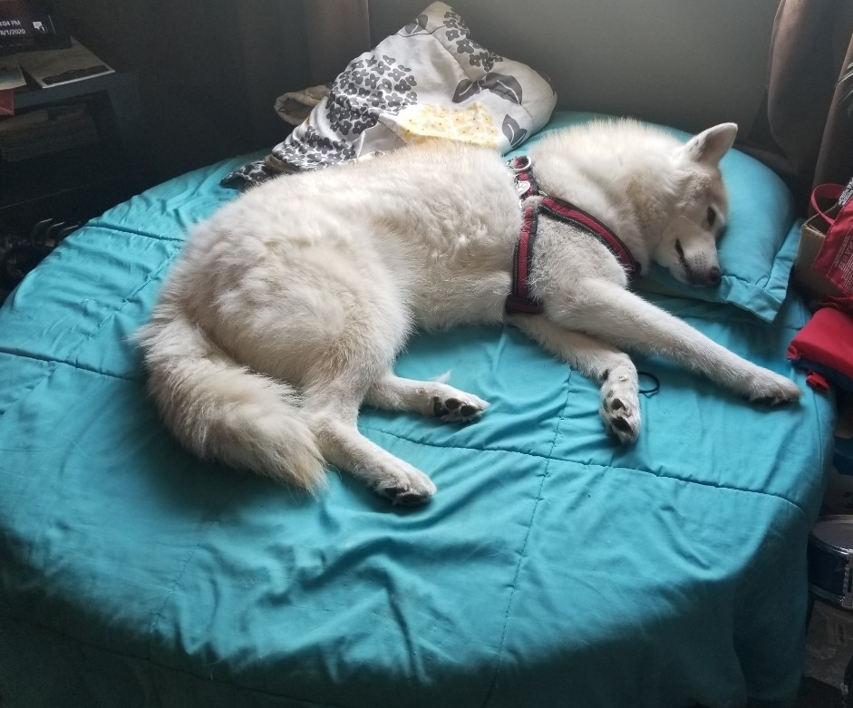 Max needed surgery