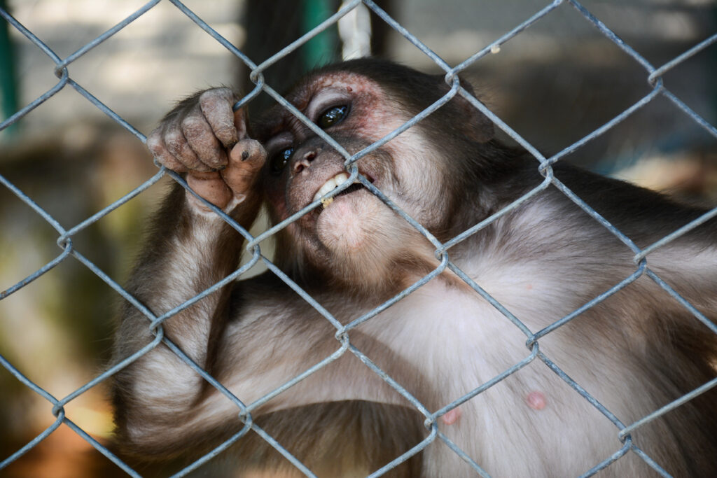Ask the Prime Minister to end the wildlife trade