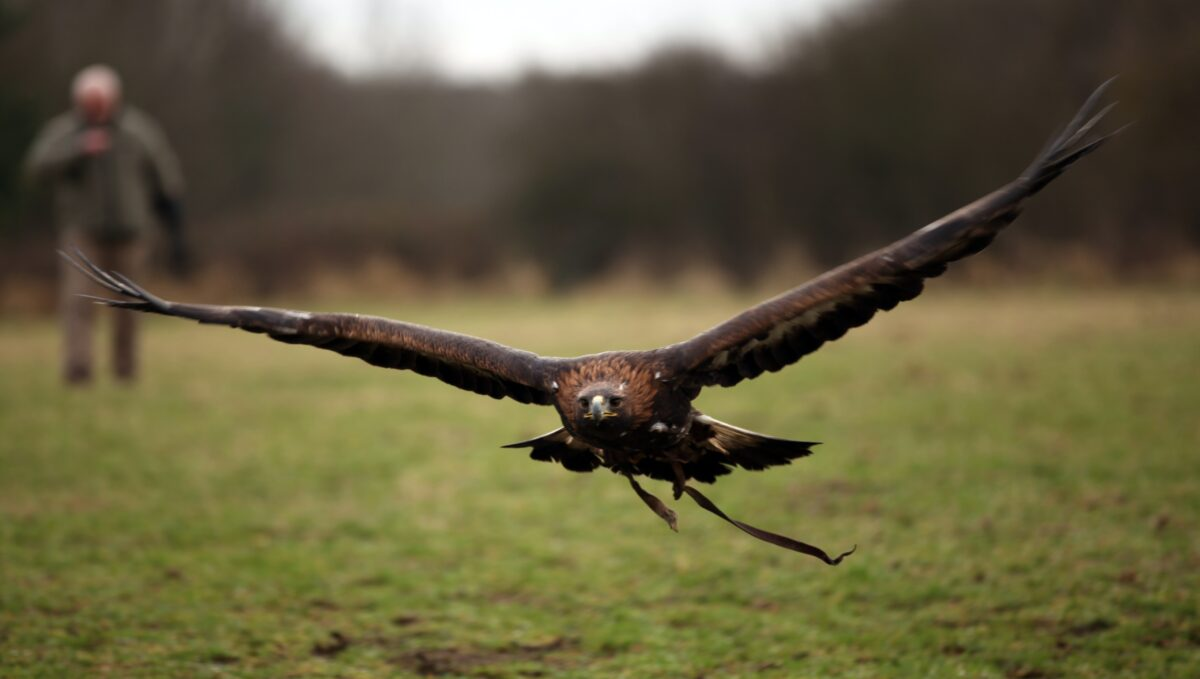 A golden eagle flies away after being rescued from a close call with wildlife poisons