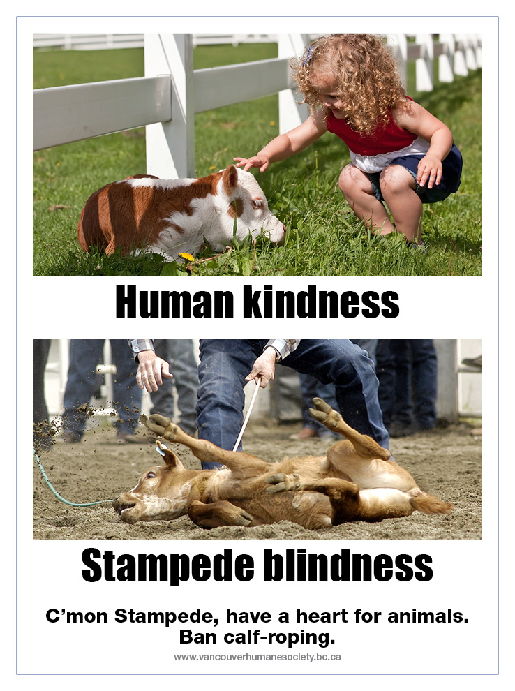 Vancouver Humane Society ad against calf-roping