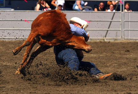 steer is killed in Luxton Rodeo